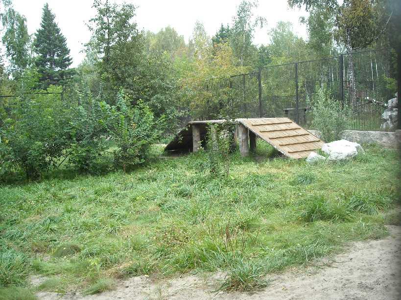 Новосибирский зоопарк (фото 2223)