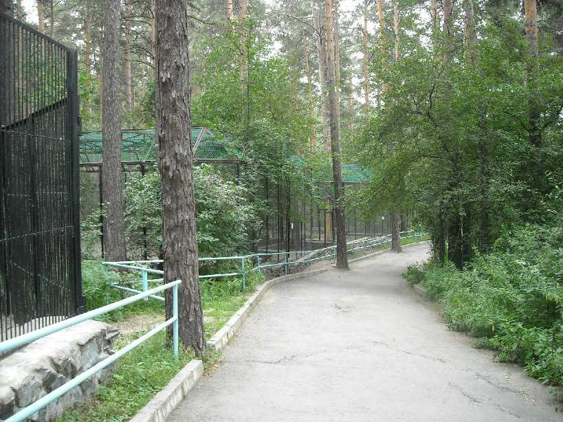Новосибирский зоопарк (фото 2283)