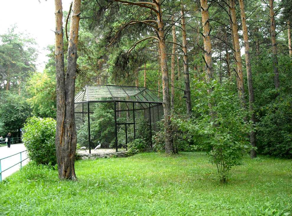 Новосибирский зоопарк (фото 2318)