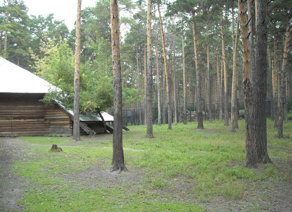 Новосибирский зоопарк (фото 2320)