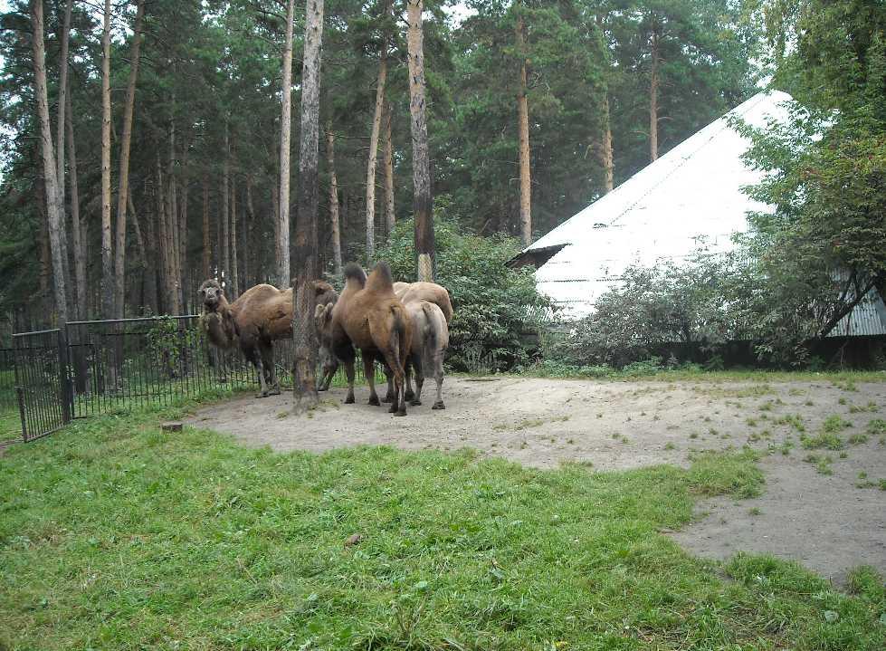Новосибирский зоопарк (фото 2321)