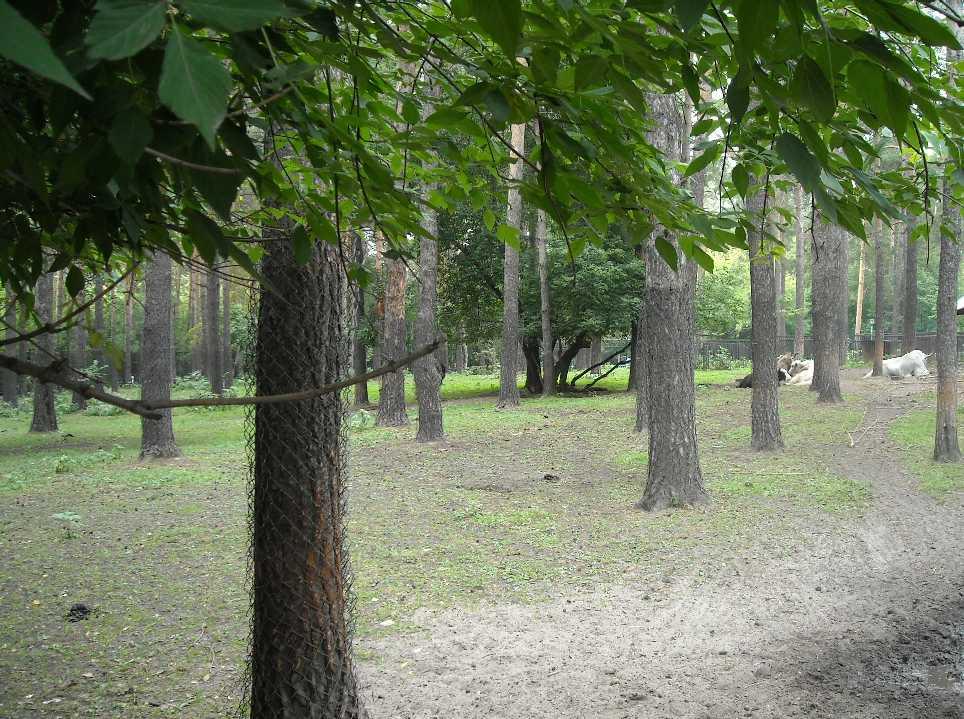 Новосибирский зоопарк (фото 2323)