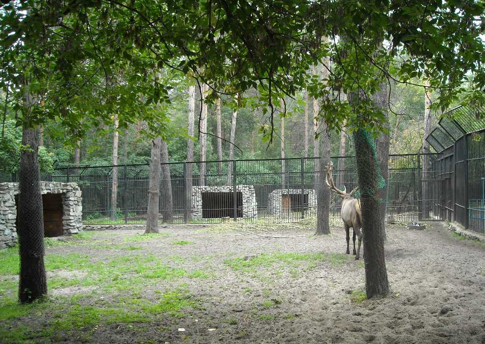 Новосибирский зоопарк (фото 2324)