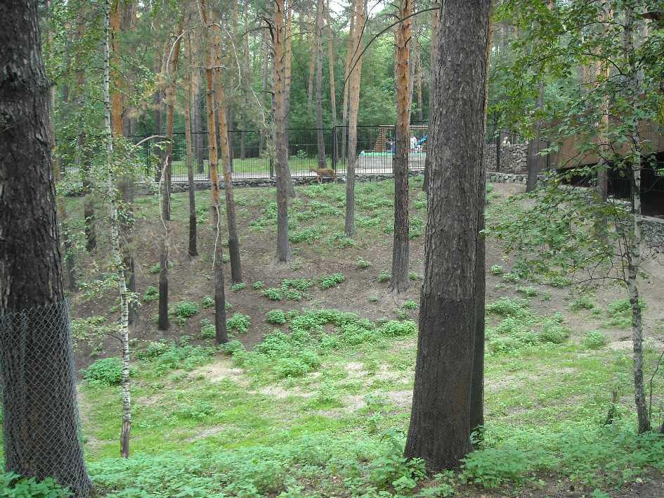 Новосибирский зоопарк (фото 2331)