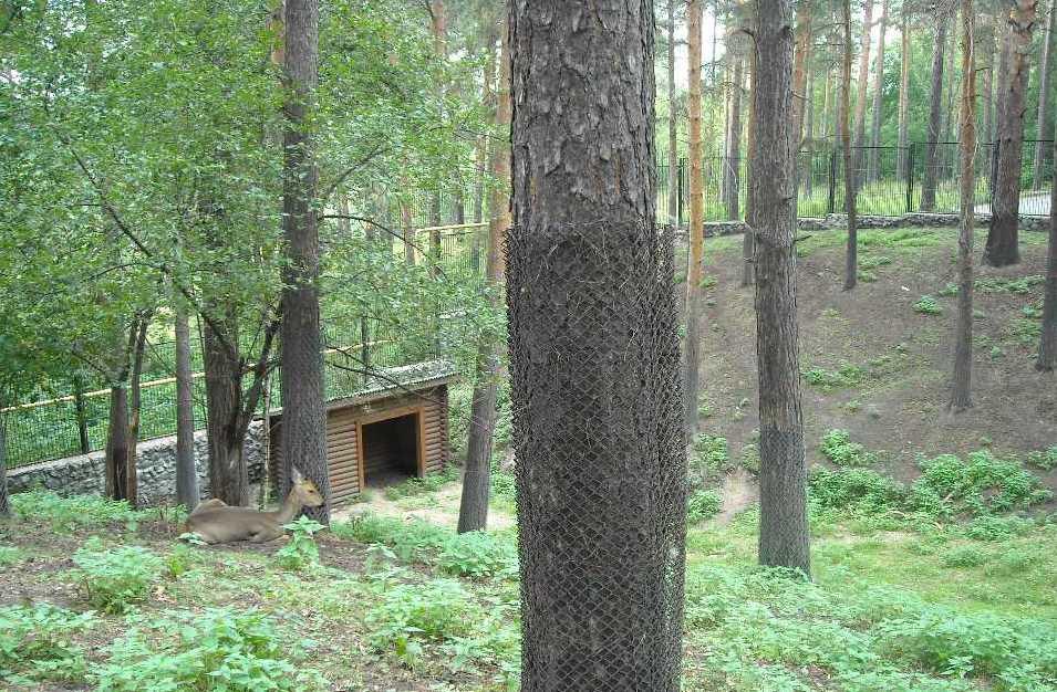 Новосибирский зоопарк (фото 2332)