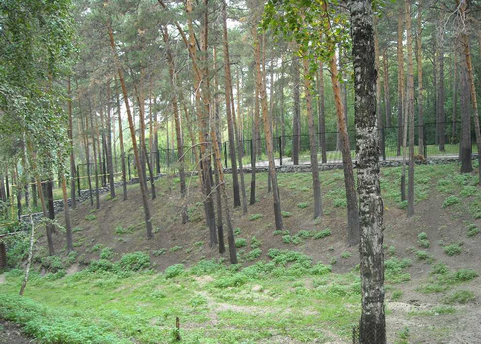 Новосибирский зоопарк (фото 2333)