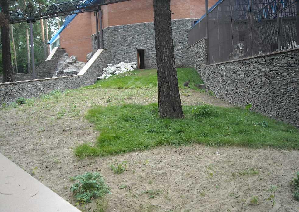 Новосибирский зоопарк (фото 2338)