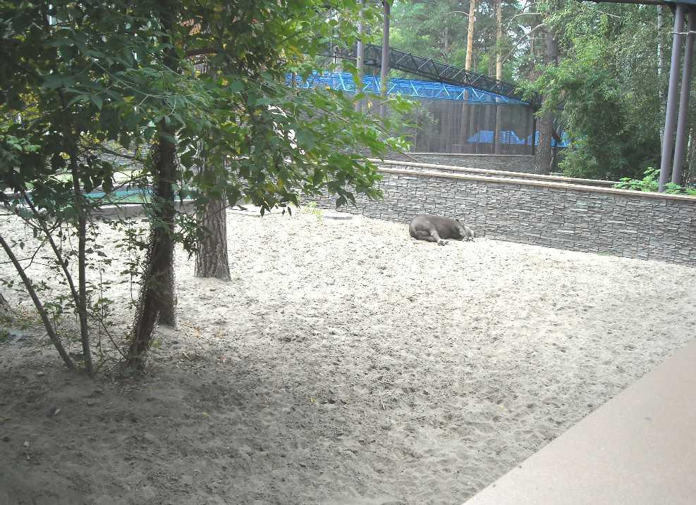 Новосибирский зоопарк (фото 2340)