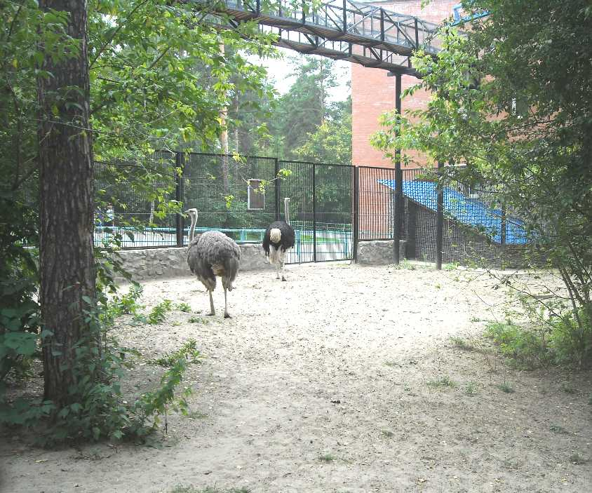 Новосибирский зоопарк (фото 2341)