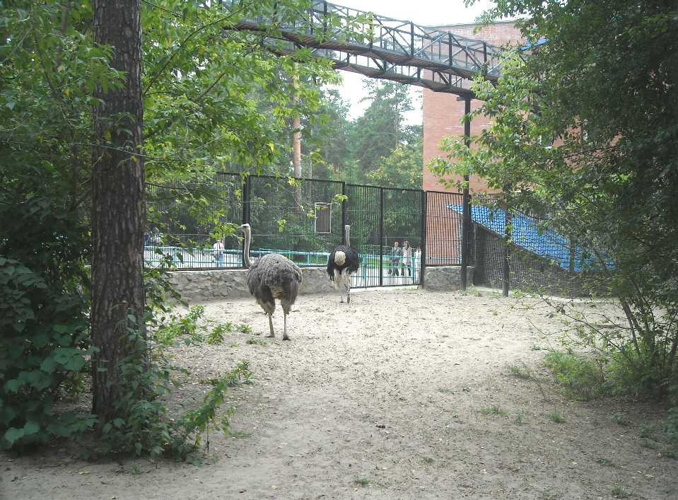 Новосибирский зоопарк (фото 2342)