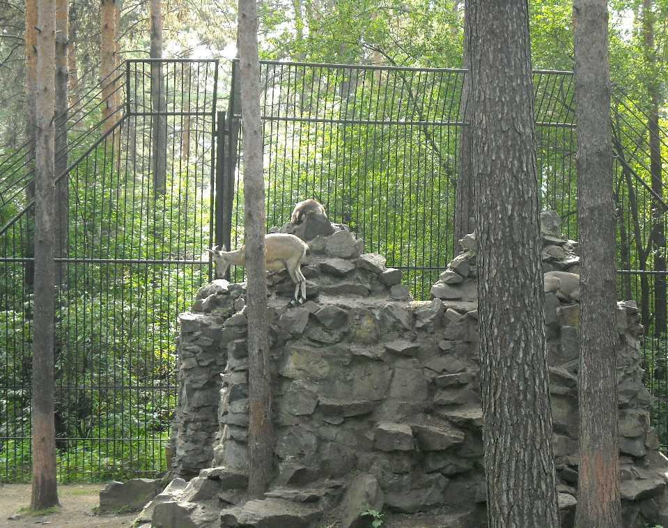 Новосибирский зоопарк (фото 2351)