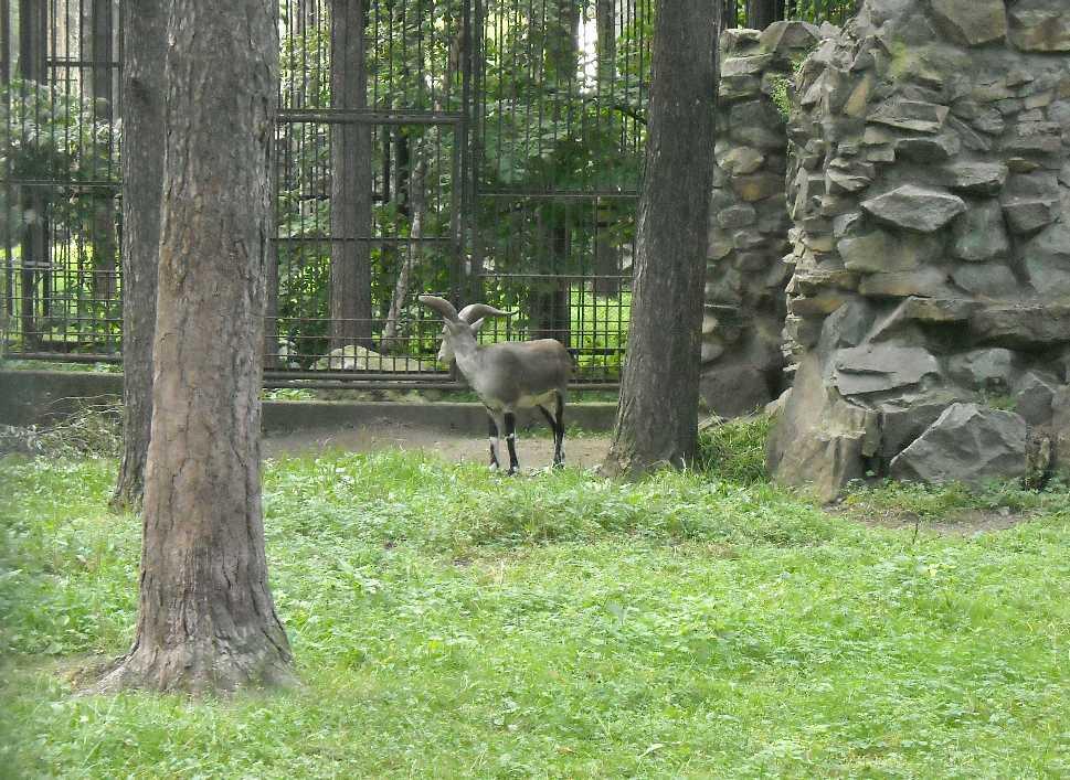 Новосибирский зоопарк (фото 2352)
