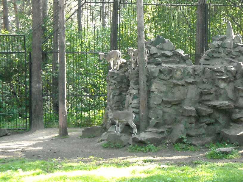 Новосибирский зоопарк (фото 2364)
