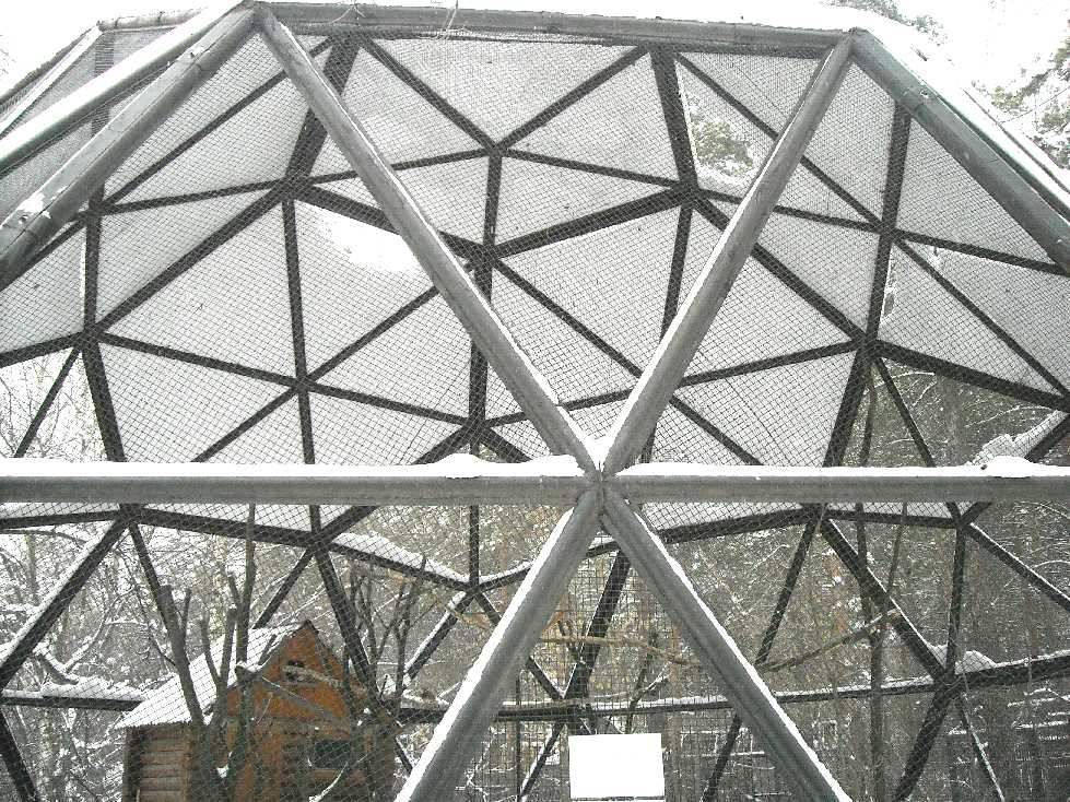 Новосибирский зоопарк (фото 2725)