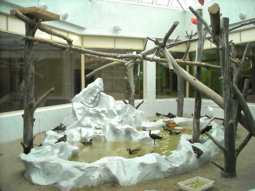 Новосибирский зоопарк (фото 2967)