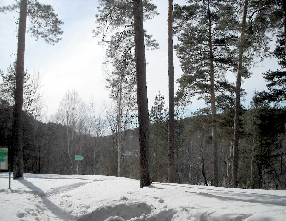 Новосибирский зоопарк (фото 3324)