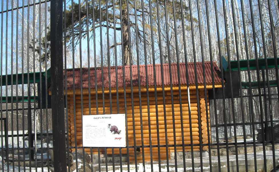 Новосибирский зоопарк (фото 5849)