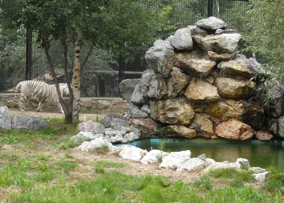 Новосибирский зоопарк (фото 6638)