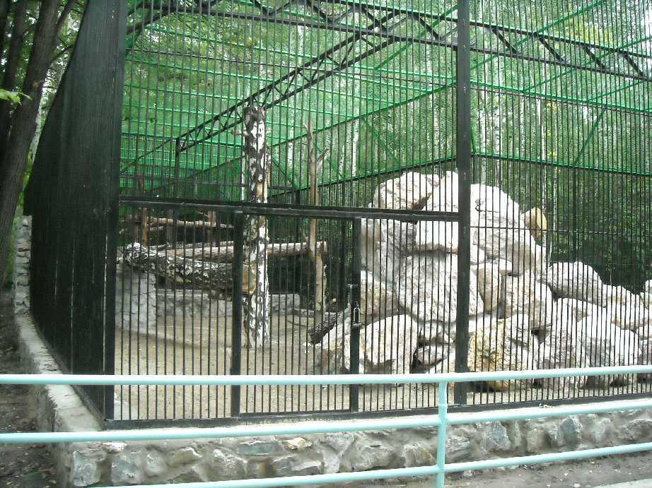 Новосибирский зоопарк (фото 6808)